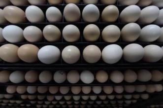 مخالفة 25 محلًّا في جدة بسبب البيض - المواطن