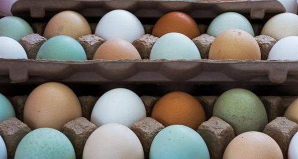 في #اليابان.. بيض جديد بنكهة ورائحة الفاكهة - المواطن