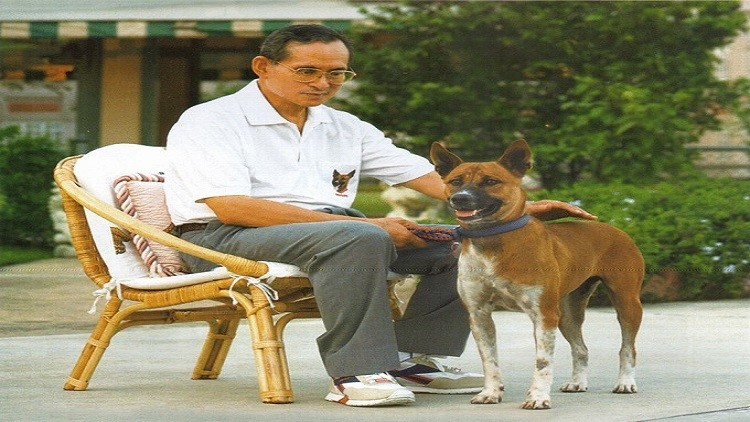تايلاند-حزين-لموت-كلبه