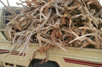 ضبط 10 أطنان من الحطب في القصيم - المواطن
