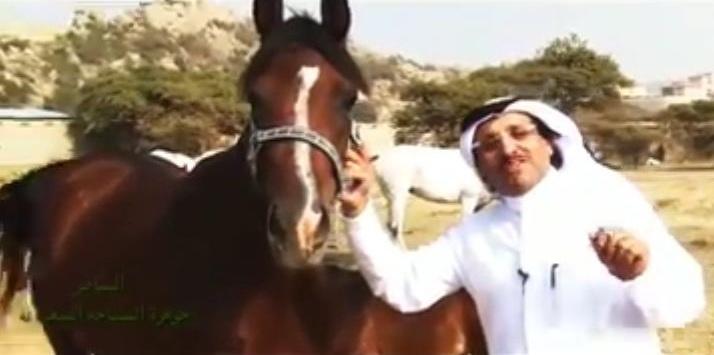 تربية الخيول بالنماص