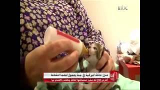 تربية قطط في جدة