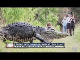 شاهد.. تمساح ضخم يثير دهشة الناس في متنزه بفلوريدا - المواطن