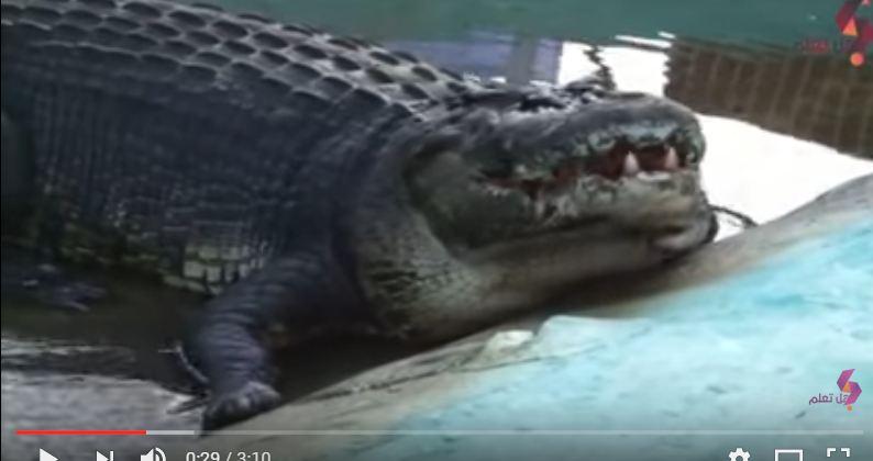 بالفيديو.. 7 حيوانات ضخمة لا تتخيل وجودها على الأرض