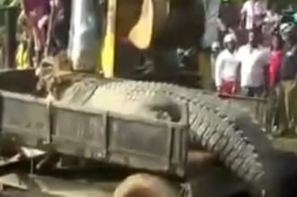 شاهد.. العثور على تمساح عملاق يزن قرابة طن وطوله 17 قدماً في سيريلانكا - المواطن