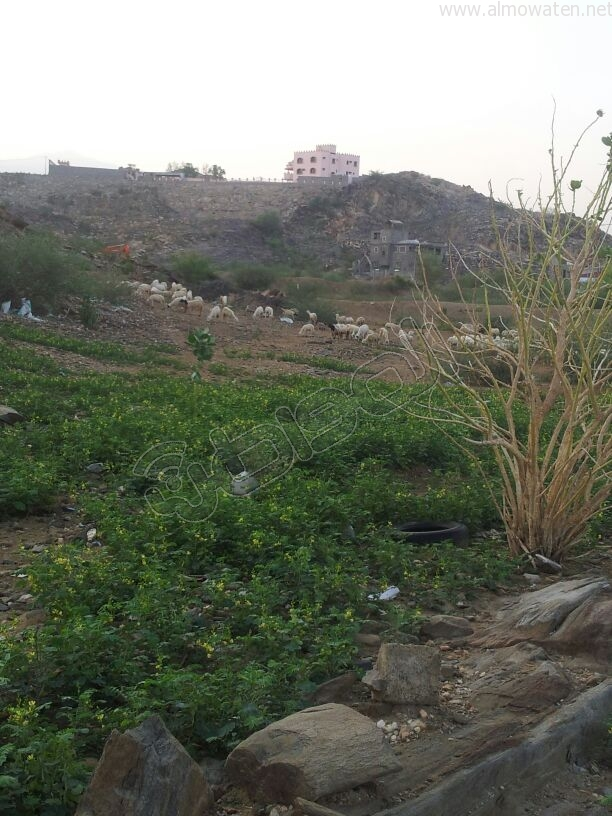 شاهد .. لقطات من ثلوث المنظر بمنطقة عسير بعد هطول الأمطار