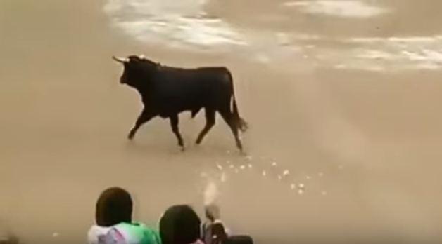 #تيوب_المواطن :ثور هائج يقفز على الجمهور بحلبة مصارعة الثيران في البيرو - المواطن