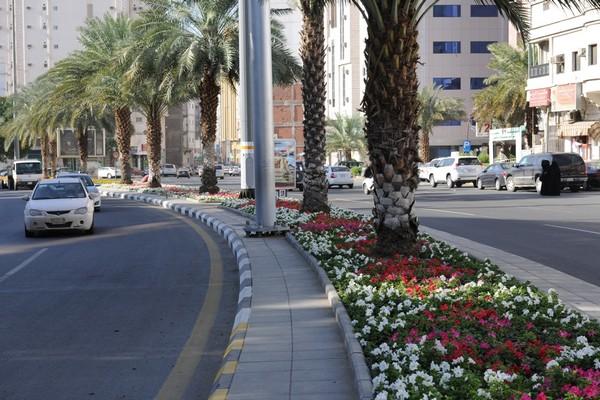 جانب من زراعة الشوارع (1)