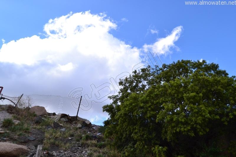 جبال #ثقيف ومروجها تصنع لوحة خلابة (4)