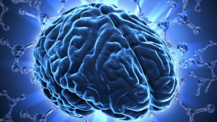 جمجمة-دماغ