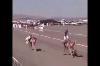 بالفيديو.. سقوط مروع لمتسابق من فوق جمل - المواطن