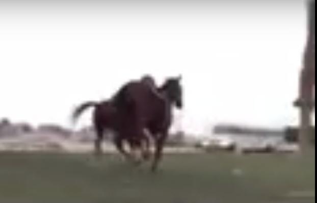حادث حصانين الخبر