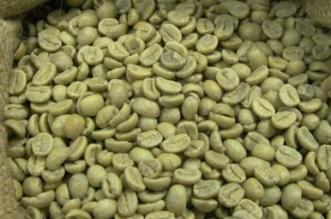 #خالد_النمر يوضح.. هل تعالج القهوة الخضراء الضغط؟ - المواطن