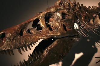 حدث نادر رصد ورم بحفرية عمرها 255 مليون عام