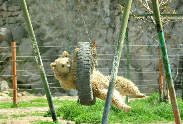حديقة حيوانات أنقرة