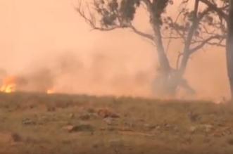 حرائق الغابات نيو ساوق ويلز