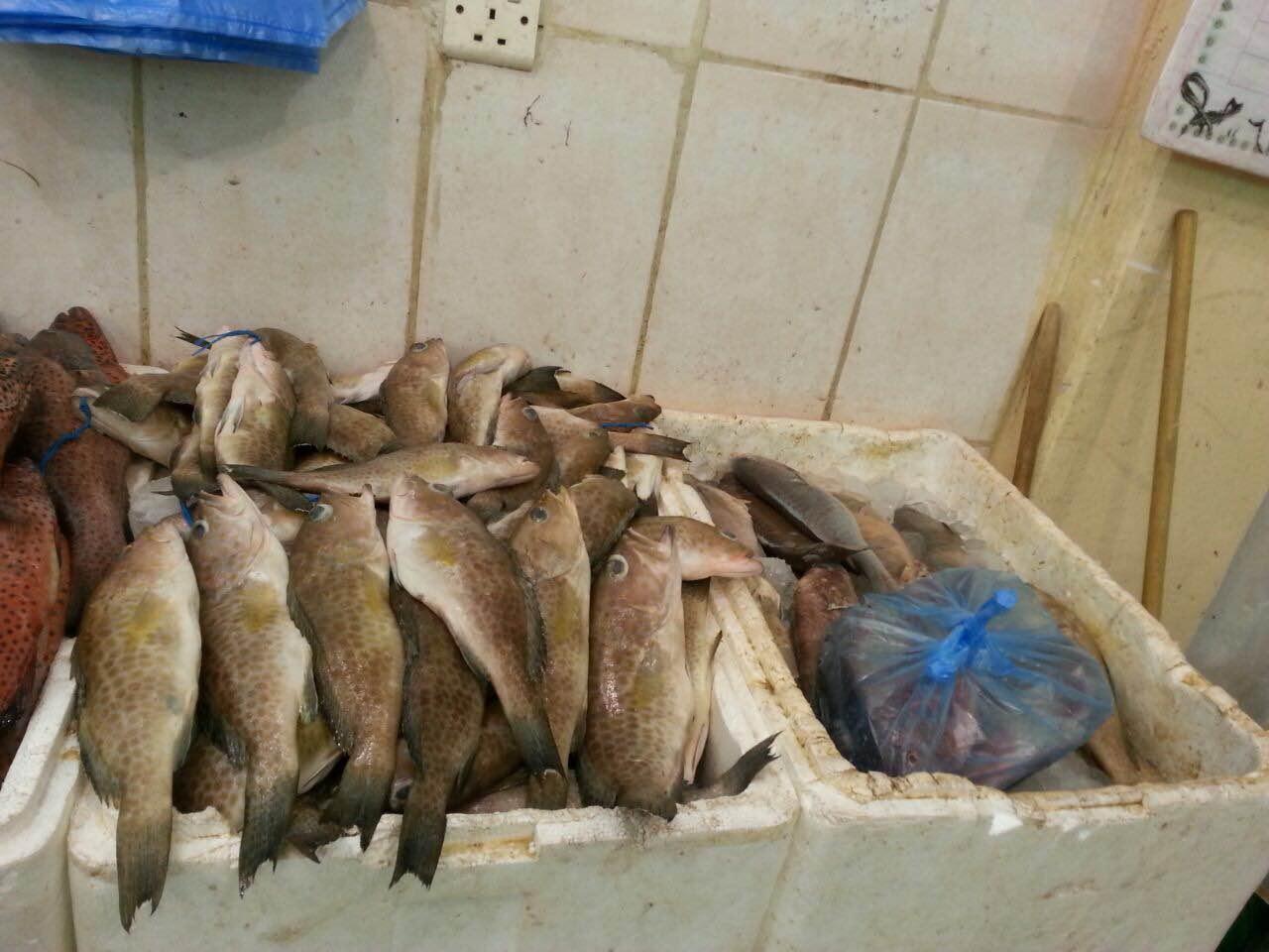 حرارة الاجواء واقتراب رمضان يسجلان ركودا في اسواق السمك بمكة (3)