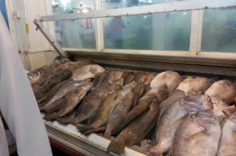 حرارة الأجواء تضرب أسواق السمك بمكة المكرمة - المواطن