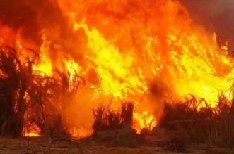 التخلّص من نفايات يشعل النيران في 5 آلاف متر مربع بأبها - المواطن