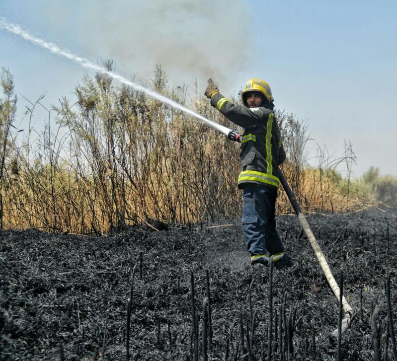 حريق اشجار