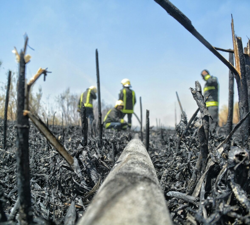 حريق اشجار1 (2)
