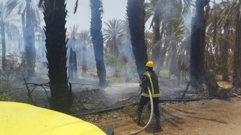 حريق مزرعة بيشة (7)