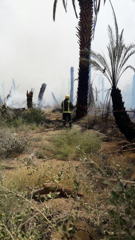 حريق مزرعة بيشة (8)