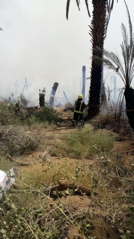 حريق مزرعة بيشة (9)