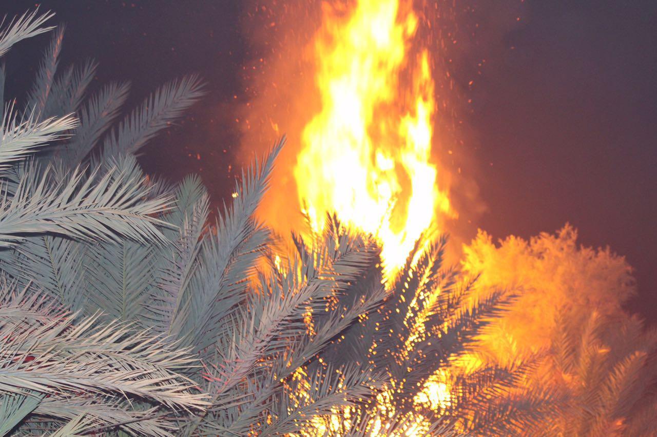 حريق نخيل الحوف (3)