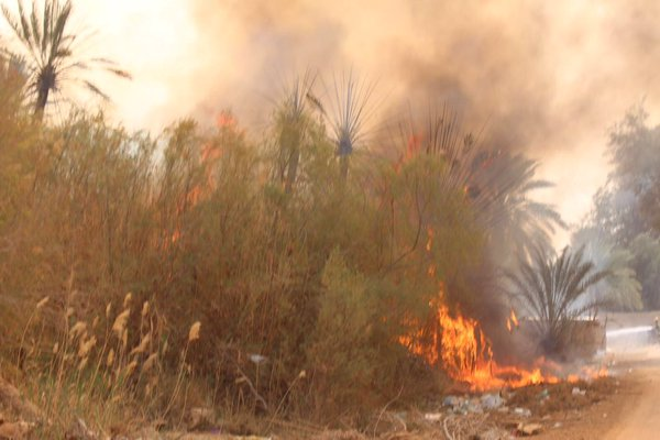 حريق هائل نخل بح العباس (2)