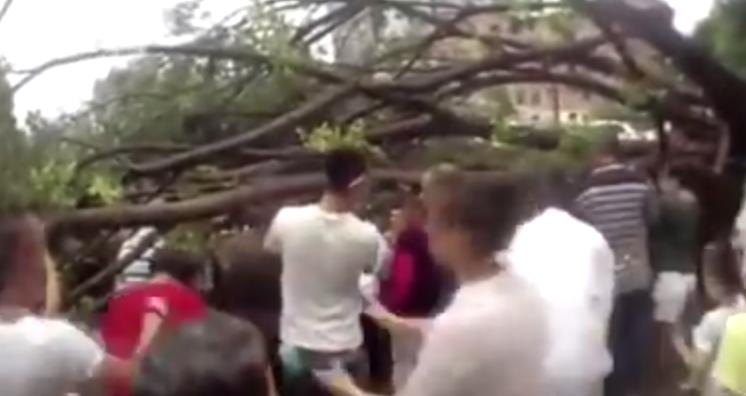 حشد من الناس يتجعون لرفع شجرة بالصين