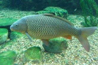 حظر استيراد الأسماك الحية من تايلاند وماليزيا - المواطن
