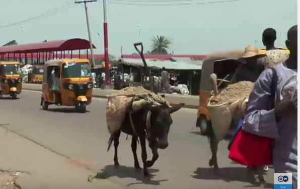 -نيجيريا