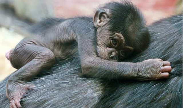 شاهد بالصور .. الأمومة ليست حكراً على البشر