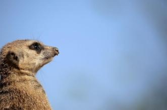 بالأرقام.. 1000 نوع من الحيوانات ترتكب مجازر بحق بني جنسها - المواطن