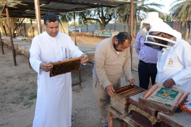 خبراء-النحل-بنجران 1