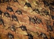 الخفافيش موجودة منذ أكثر من 33 مليون سنة!