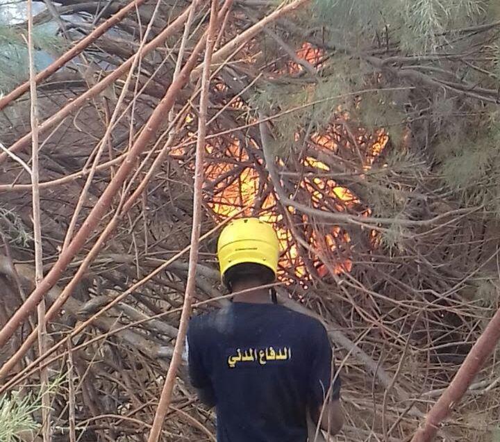خماد حريق مروع بمزرعة نخيل بنجران (1)