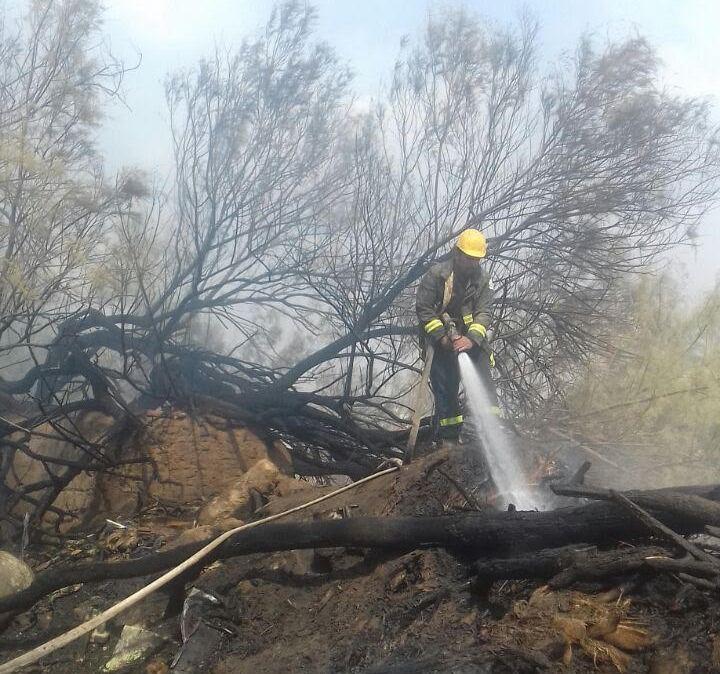 خماد حريق مروع بمزرعة نخيل بنجران (2)