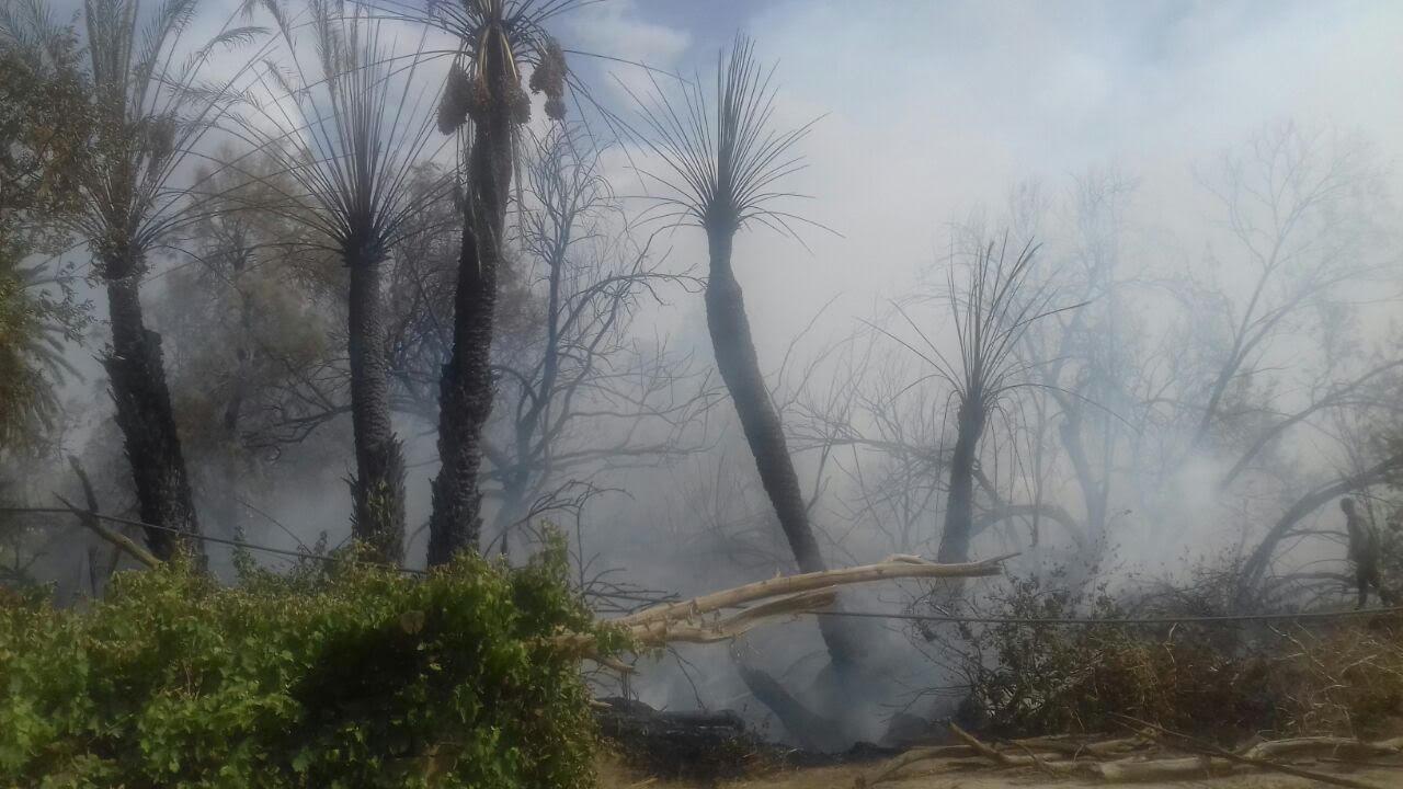 خماد حريق مروع بمزرعة نخيل بنجران (4)