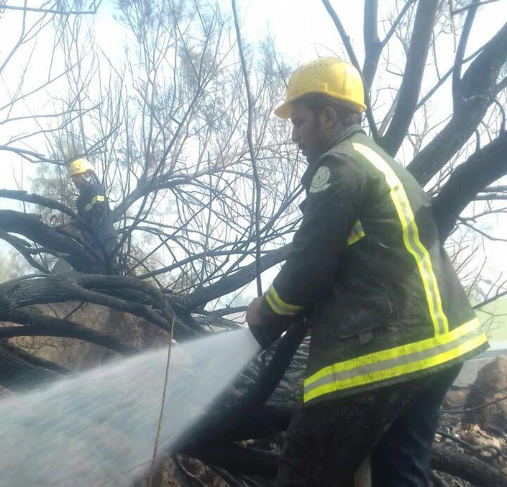 خماد حريق مروع بمزرعة نخيل بنجران (5)