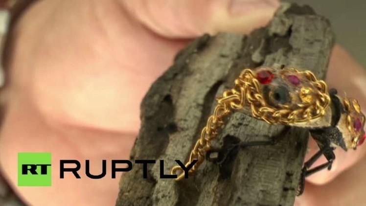 بالفيديو من المكسيك.. خنافس مُرصّعة بالمجوهرات - المواطن