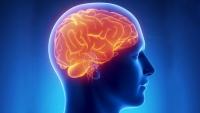 دماغ (1)