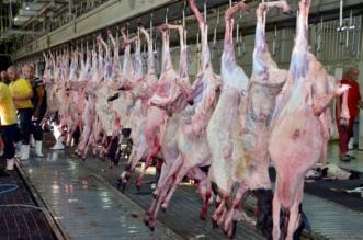 أمانة نجران تتلف 390 كيلو من اللحوم الفاسدة - المواطن