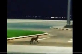 مطار بيشة ردًا على مقطع الذئب : أمر ملحوظ ومستمر - المواطن
