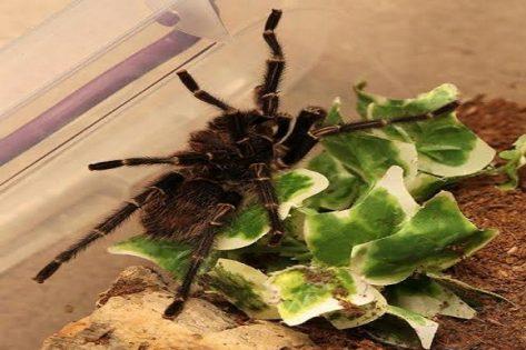 ربة منزل على فوبيا العناكب (1)