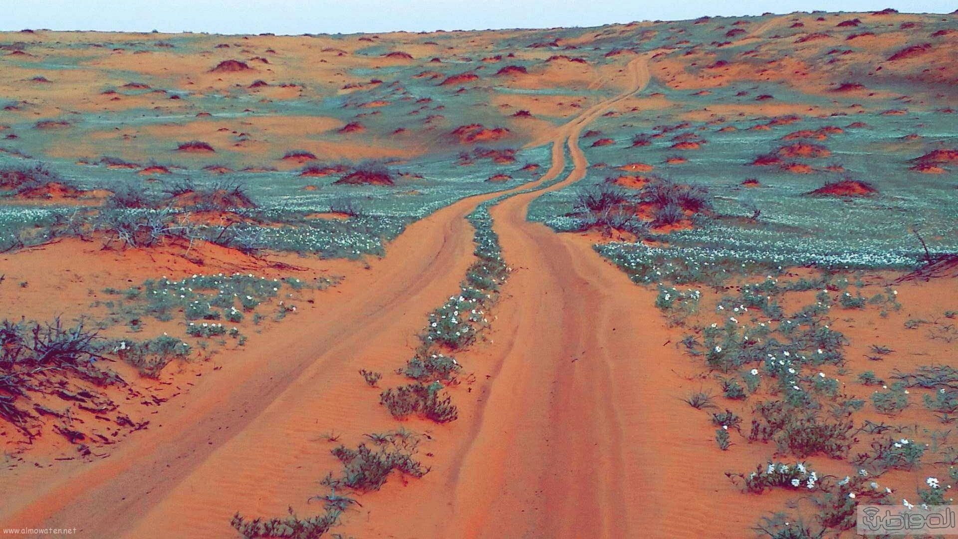ربيع الجبيلي وعذفا شمال السعودية (10)