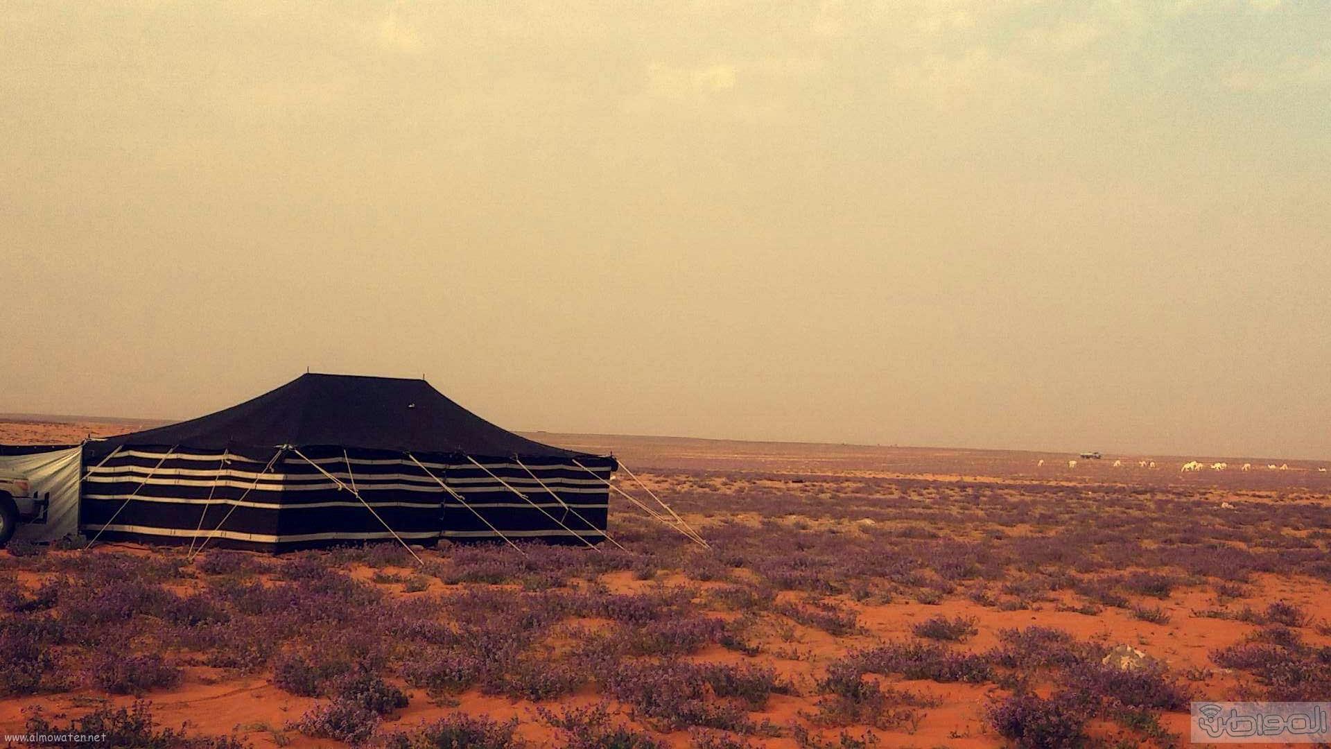 ربيع الجبيلي وعذفا شمال السعودية (12)