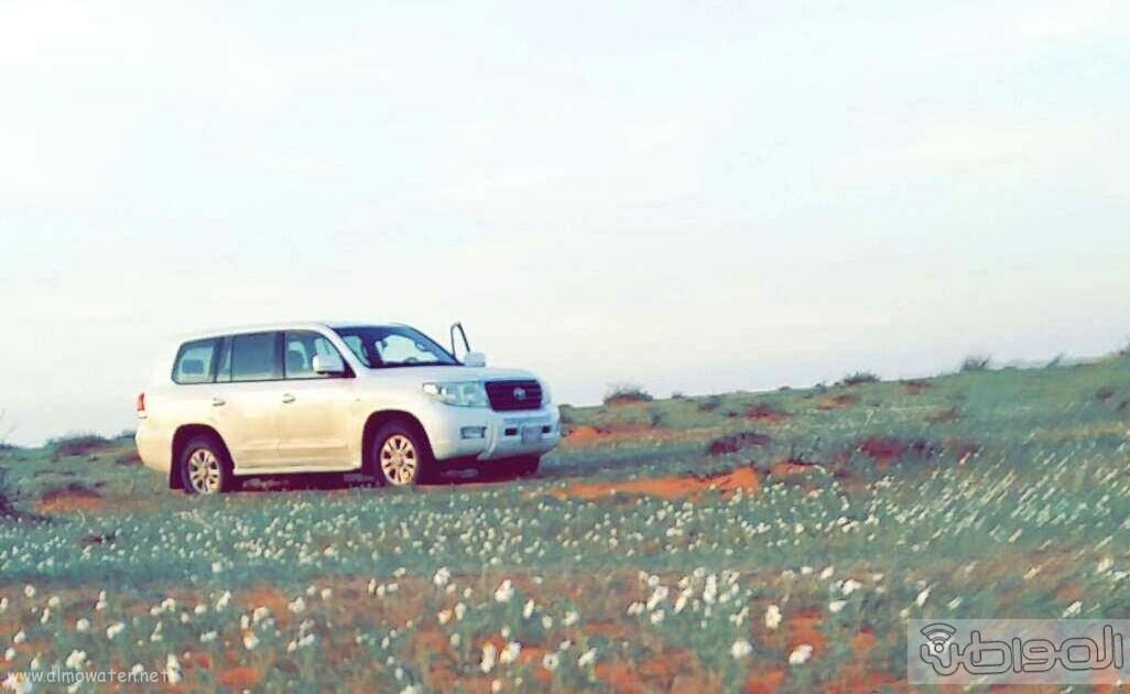 ربيع الجبيلي وعذفا شمال السعودية (2)