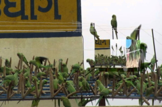 شاهد.. قصة رجل يُطعم 3 آلاف طائر يوميًّا - المواطن